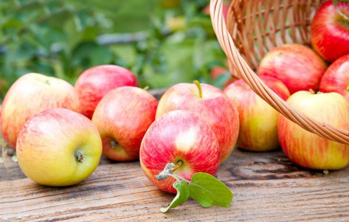 Cámara de conservación de fruta