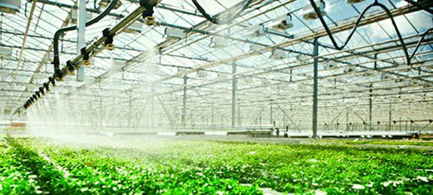 Desinfección de suelos en invernaderos