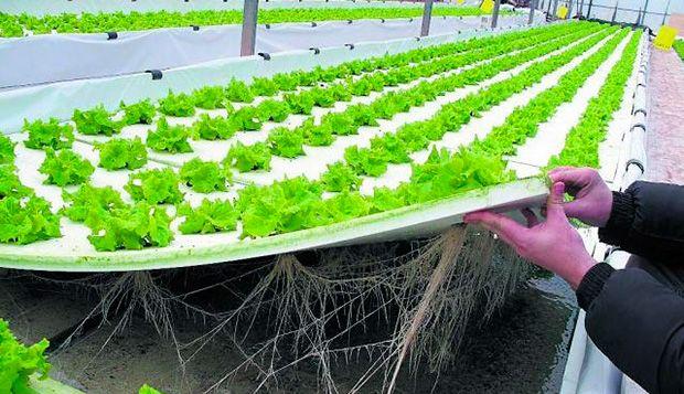Suelo agrario en invernadero desinfección