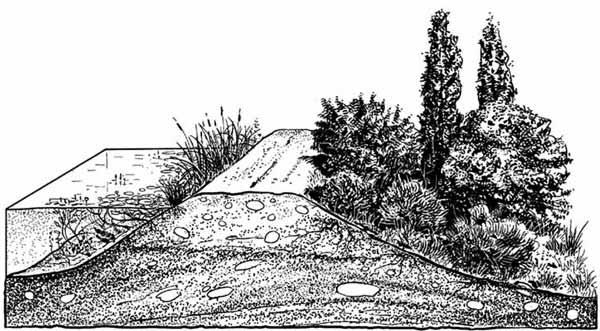 Ecosistema en la balsa agrícola