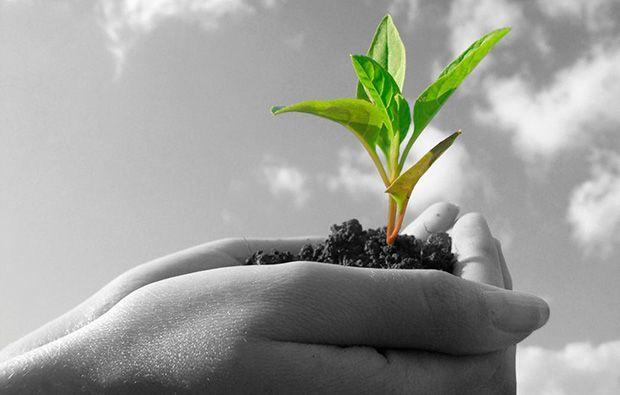Aumenta la calidad del suelo con ozono