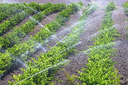 Riego con ozono en la agricultura
