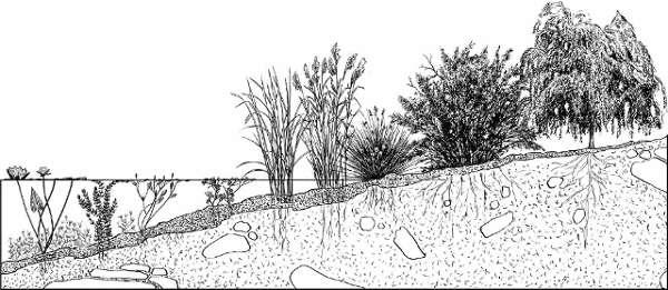 Vegetación en las balsas agrícolas